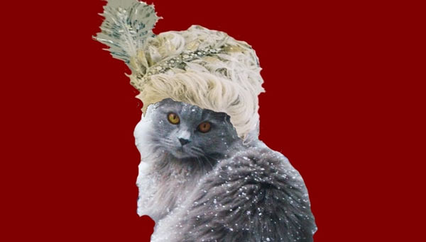 Cat with a wig