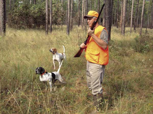 Quail Hunter with Dogs