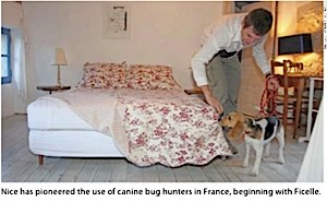 Bedbugs Ficelle the sniffer dog.